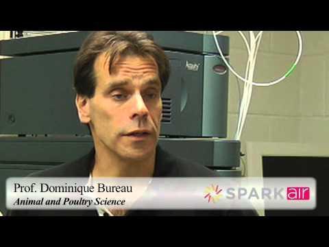 Prof. Bureau