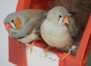 davidclayton-speaker-birds