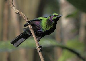 birdkingdom